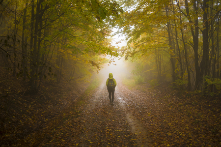 Dreamy autumnal forest path inviting you on a magical journey through the woods.