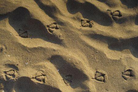 huellas de animales: pistas de la gaviota en la playa arenosa en la salida del sol.
