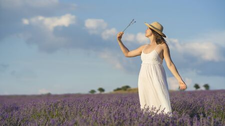 conceived: Beautiful young woman wearing a white dress standing in the middle of a lavender field holding a few blades of  lavender. Stock Photo
