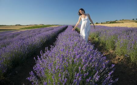 Beautiful young woman wearing a white dress walking in the middle of a lavender field in bloom. 版權商用圖片