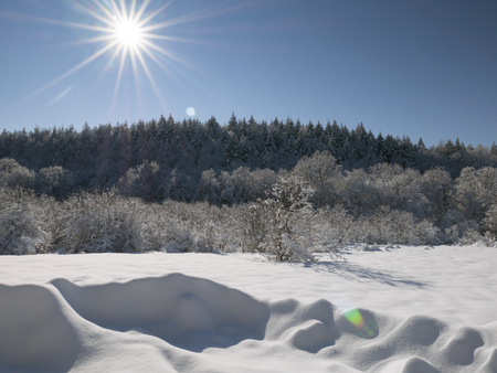 Deep snow covering the meadow and the forest on a bright sunny day with blue sky.