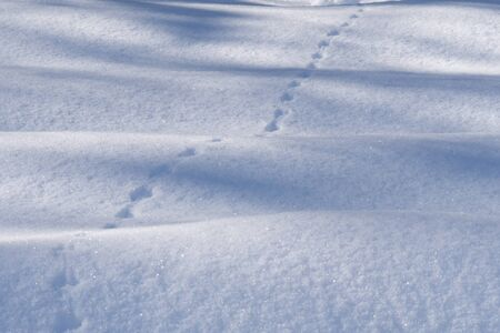 Animal tracks in the thick layer of wavy snow.