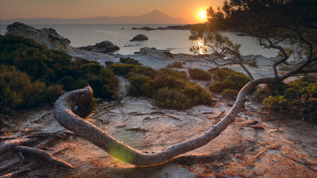 The sun rising behind Mount Athos on the Greek coast of Chalkidiki shining over a curvy pine tree. 版權商用圖片