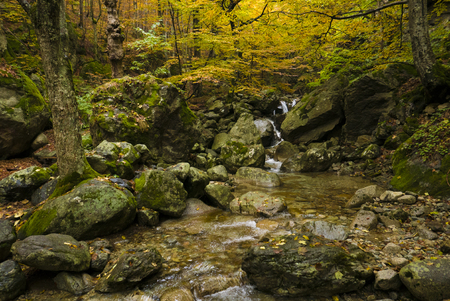 Pure mountain stream flowing through mature ancient forest in autumnal colors.