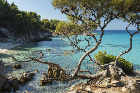 Pine trees against the vibrant turquoise waters of the Aegean Sea.