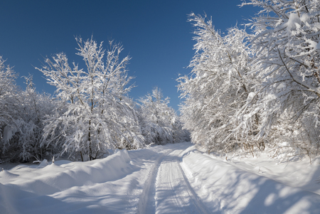Beautiful white snow covering the trees and branches creating a snowy tunnel on a sunny winter day with blue sky.