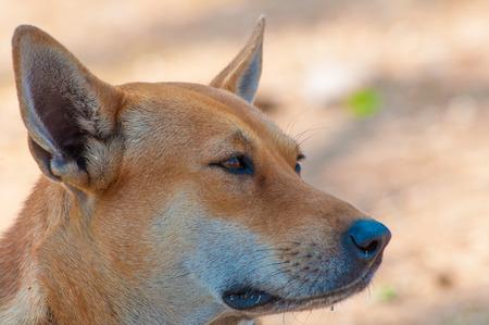 solter�a: primer plano perro. Foto de archivo