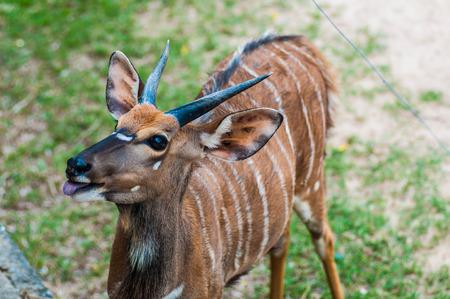 Deer  Looking Deer Zoo Deer Stock Photo