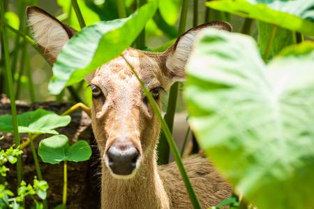 deer in nature.