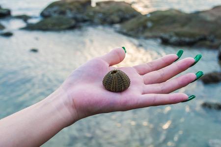 interdigital: Shell put on the palms woman.