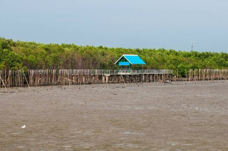foret sapin: Mangrove arbres forestiers � la Tha�lande.