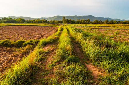 plowed: Plowed farmland with mountain background. Stock Photo