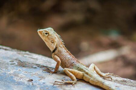 small reptiles: Gila Stock Photo