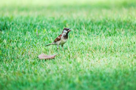 lovemaking: birdsongrass