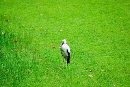 ix: Birds in natural at Suanluang RAMA IX park