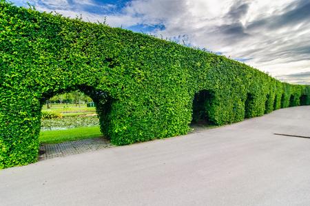 ix: trees wall in Suanluang RAMA IX park Stock Photo