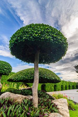 ix: decorated trees in Suanluang RAMA IX park