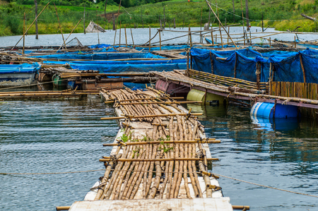 fishery: Fish farms with blue net and bamboo pathway