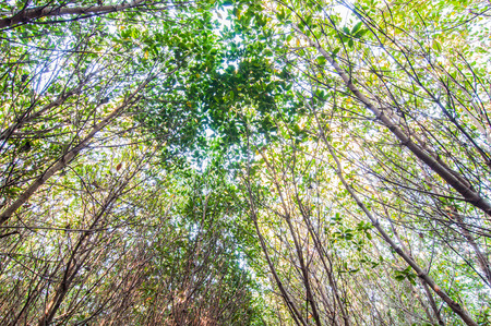unwanted flora: under view mangrove forest