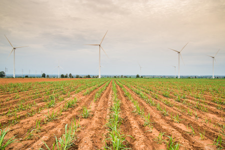 rural development: Wind power installations in agriculture the country at thailand.
