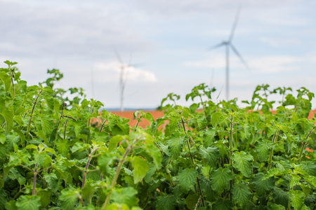 windfarms: Wind power installations in agriculture the country at thailand.