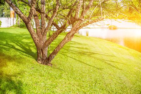 Calabash, Calabash Tree, Wild Calabash.