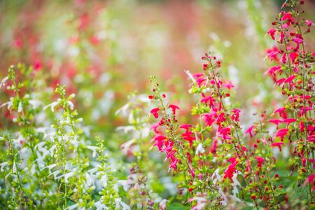 Beautiful pink flowers on green grass background.