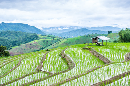View Terraced Paddy Field in Mae-Jam Village, Chaingmai, Thailand