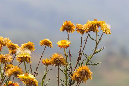 everlasting: The bees flying on flower , everlasting.