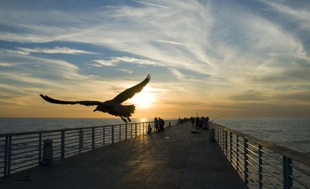 hermosa beach: a seagull flies over a fishing pier at sunset in Hermosa Beach,California Stock Photo