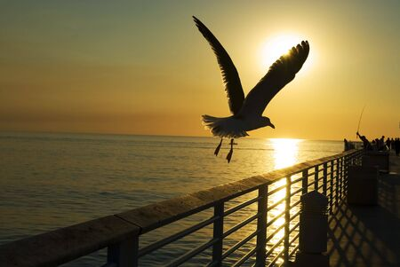 a seagull flys off into the sunset over the ocean