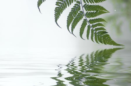 Fern leaf in a misty forest
