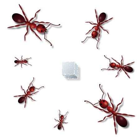 hormiga caricatura: Las hormigas y el azúcar