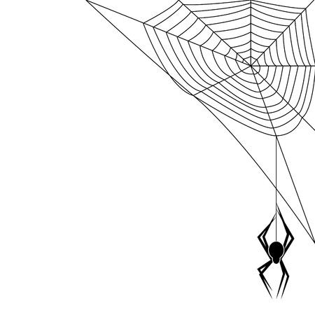 black widow: Spider