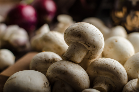 homegrown: Mushrooms raw home-grown, dark lighting, advertisment place Stockfoto