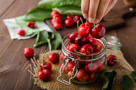 freshly picked: Freshly picked cherries
