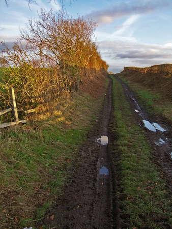 hedged: A hedged farm track in late afternoon autumn sun