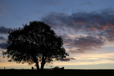 silhoutted: a tree and field fence silhoutted against a sunset sky