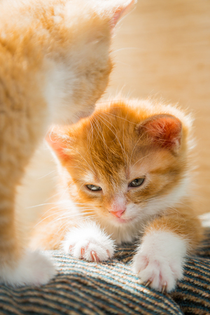 cute kittens: Two cute kittens playing on the couch