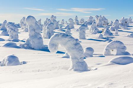 heavy snow: Frozen heavy snow on trees in beautiful landscape in Lapland