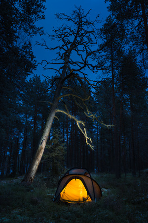 downshift: Wild camping in wilderness in old forest
