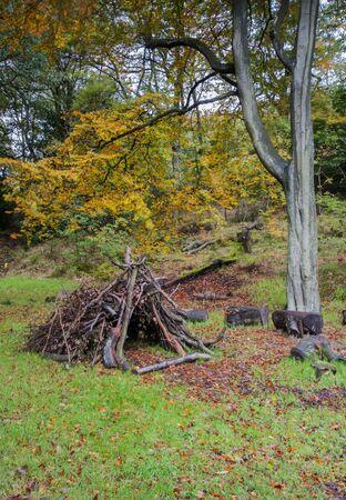 den: woodland den made of branches