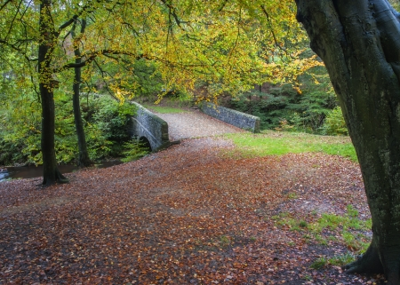 old packhorse bridge: packhorse bridge in autumn woodland in yorkshire
