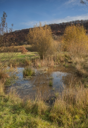 newts: natural pond on a nature reserve in yorkshire