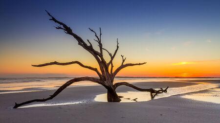 Dead tree sunset photo