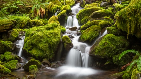 Green Moss stream photo
