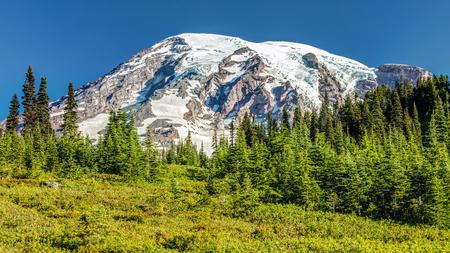 Summer on Mount Rainier. the glaciated summit of Mount rainier on a sunny day. Mount Rainier national Park, Washington 版權商用圖片