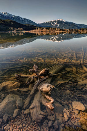 Dead trees just under the surface of Green lake on a calm morning in Whistler, BC