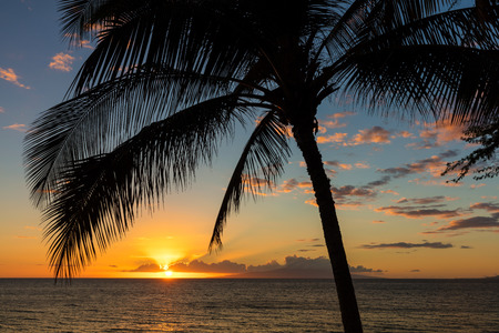 Sunset from Charley Young Beach, Kihei on the Hawaiian island of Maui. The sun setting at the horizon with the silhouette of a palm tree