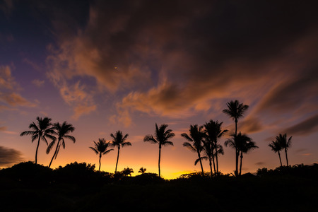 dyllic Hawaiian sunrise with silhouette of palm trees and a very colorful sky from secret beach on the tropical island of Maui